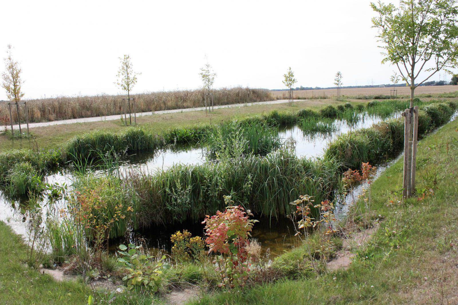 Un bassin de rétention paysager, Aménagement 77